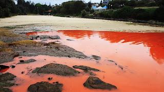 Maré vermelha em praias da Austrália