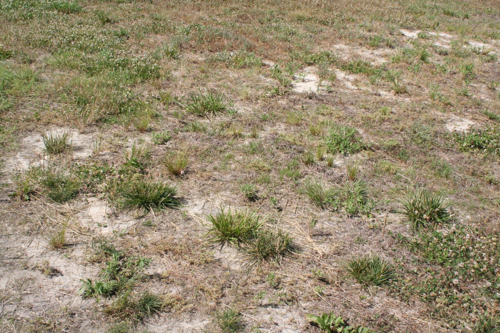 how to prepare dirt for grass