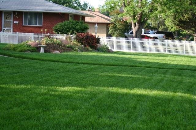 The flower bin june lawn care tips for Garden maintenance tips