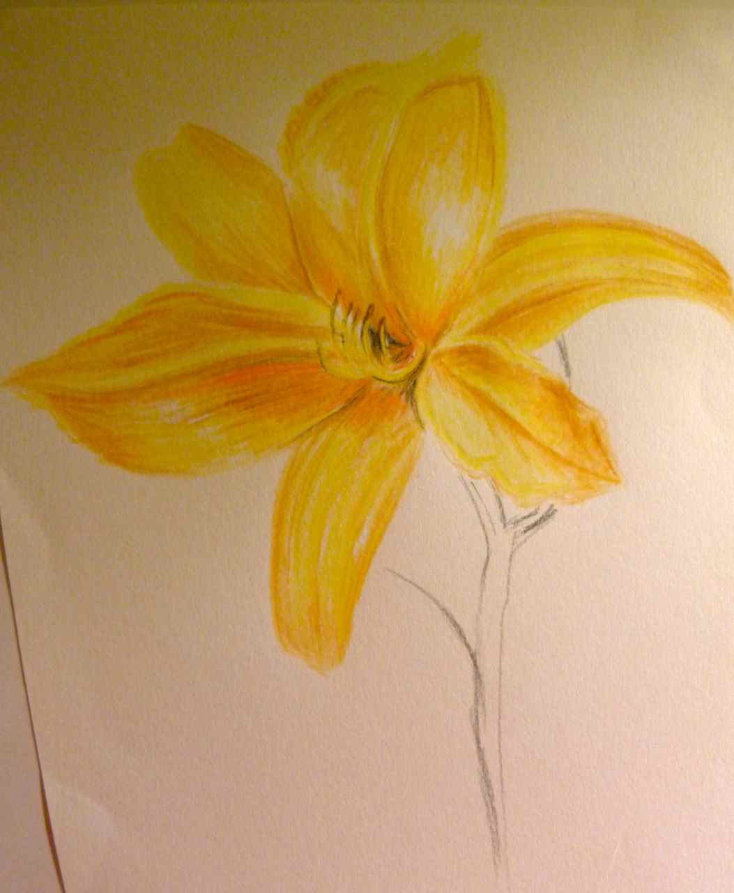 Hannah Louise Oca Drawing Skills Exercise Plants And Flowers In