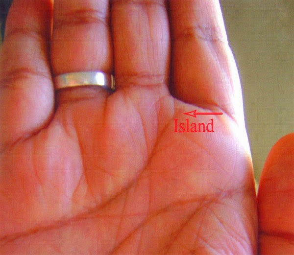 island on palm