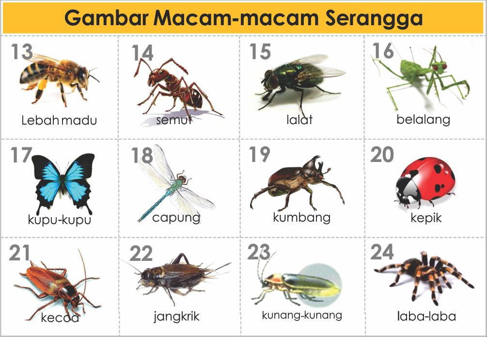 Related Keywords Amp Suggestions For Serangga