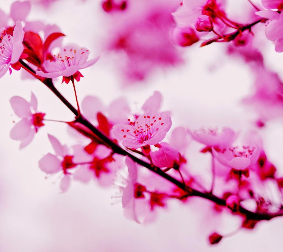 23 Gambar Batik Bunga Sakura Paling Keren