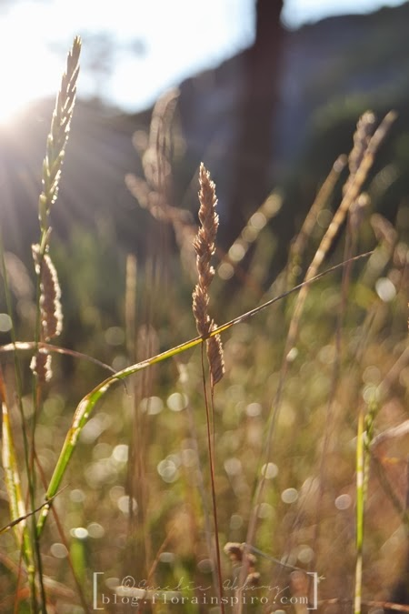ray of light, grass in ray of light, golden hour