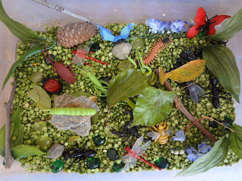 A House Of Insect Exploration Sensory Bin