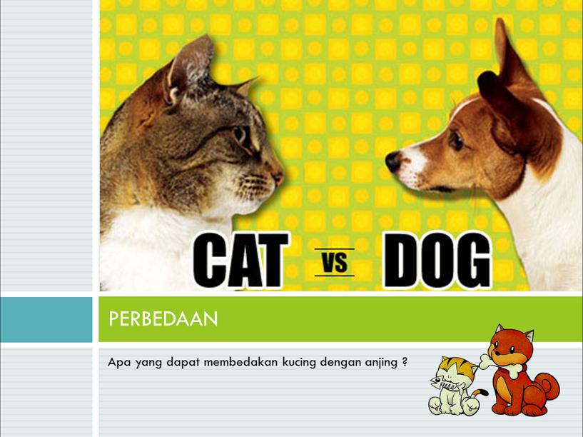 Reflection Results Teologi Kucing Amp Anjing