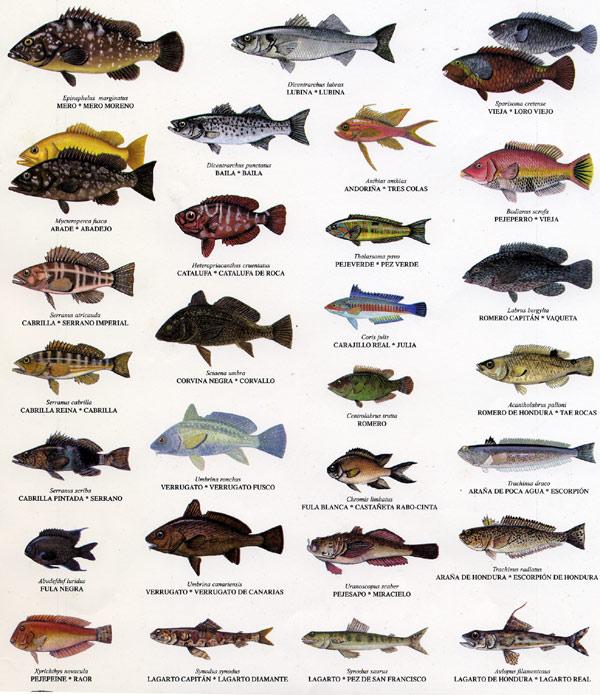 Tipos de peces con nombres imagui for Tipos de jaulas para peces
