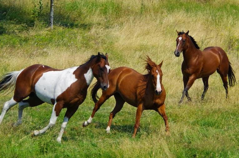 Galloping Horses from BTBU blog