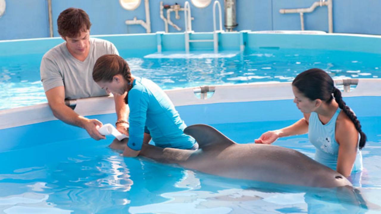 http://4.bp.blogspot.com/--u3zC4Rlk-4/Tk5Kf8T4QGI/AAAAAAAABdk/3ocUVTVqLIo/s1600/dolphin-tale-movie-2011-10.jpg