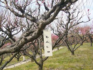 兵庫県・伊丹市 緑ヶ丘公園の梅 文殊(もんじゅ)