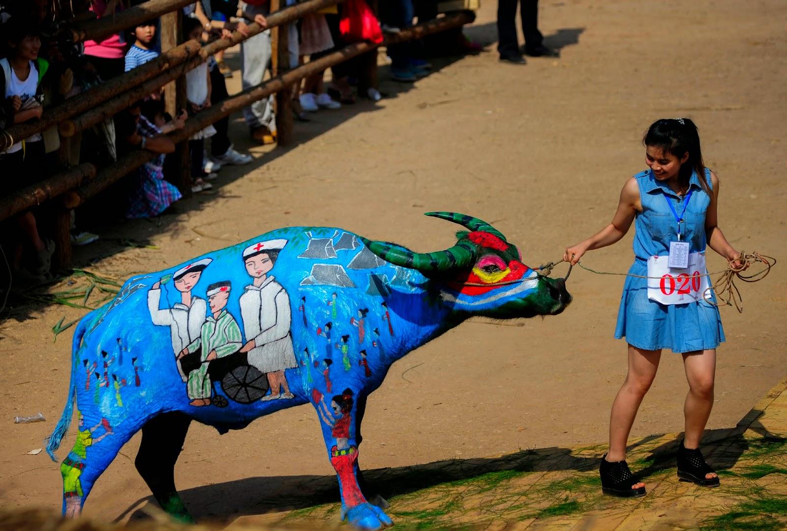 Buffalo, Bodypainting Competition, Buffalo Bodypainting, Offbeat, Animals, Animals Competitions, News, Jiangcheng, Yunnan, Artists, Painted Buffalos,