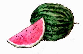 buah semangka dan puasa
