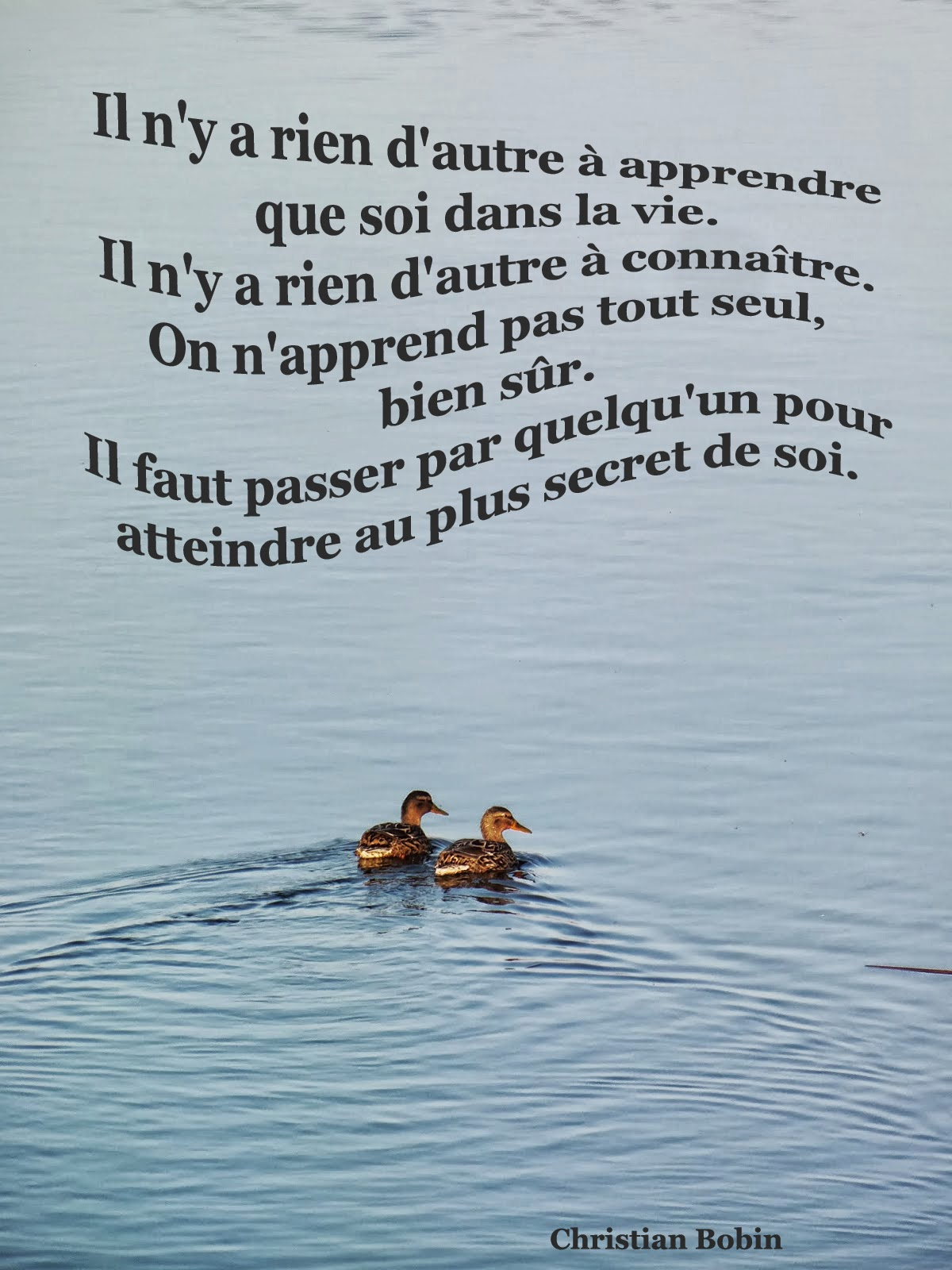 Christian Bobin (auteur) - Page 3 Couple+canard+citation+bobin