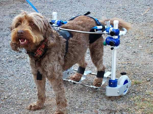 Que4patas kerdog rehabilitacion para perros for Carritos para perros
