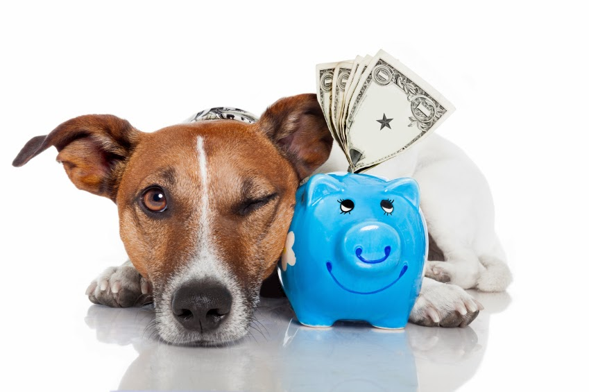 save money on pet care