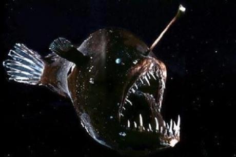 Amazing anglerfish anglerfish facts photos information for Angler fish habitat