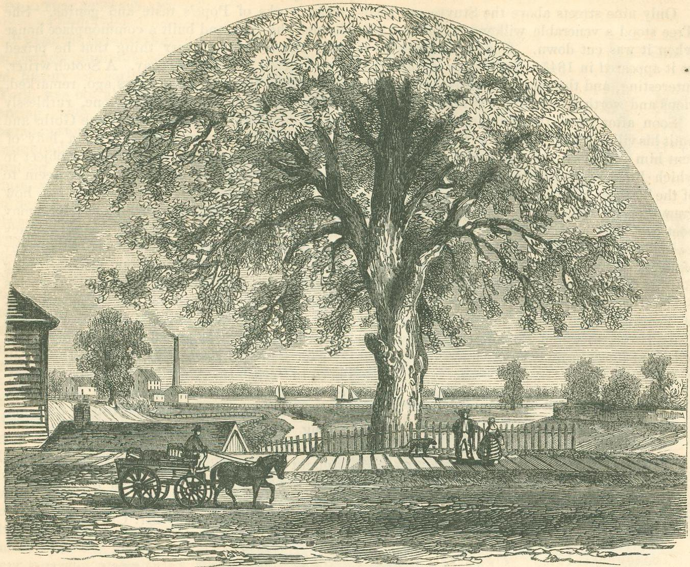 Digital history project american historical trees pontiacs memorial tree publicscrutiny Gallery