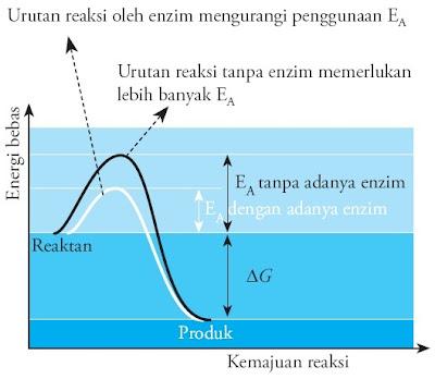 Penurunan energi aktivasi enzim