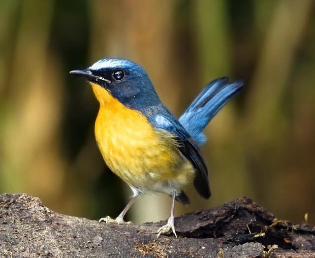 jenis jenis burung yang paling dicari saat ini dan kisaran