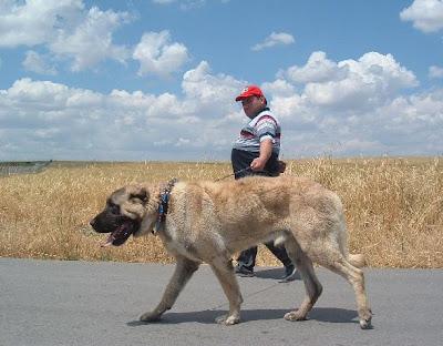 Rüyada köpek görmek köpekler