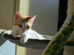 Kira,nata il 30/3/2012