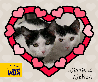 Winnie & Nelson from Chelmsford