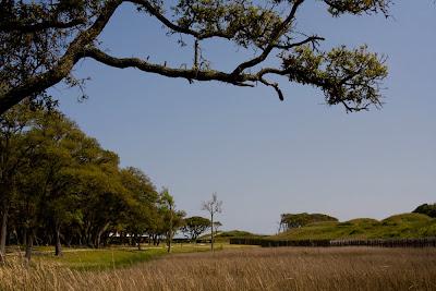 The Giraffe Head Tree Historic Fort Fisher