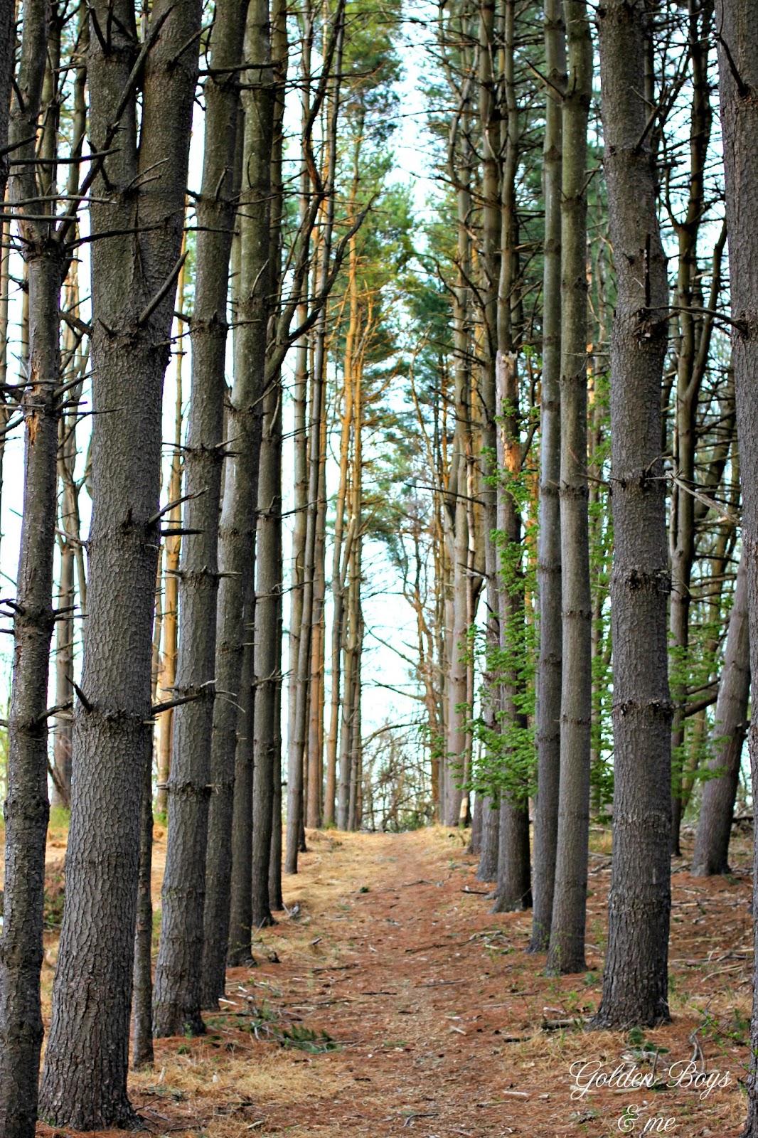 spring woods in NJ-www.goldeboysandme.com