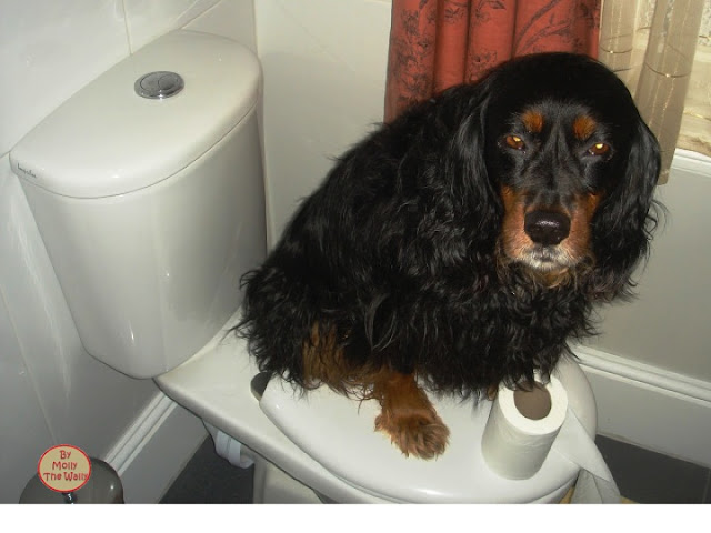 Molly The Wally Bog Blog!