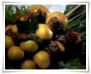 http://resepmakananku.blogspot.com/2012/04/sate-telur-ayam-muda.html
