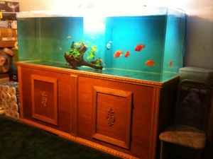 Giant aquariums 90 x30 x30 360 gal for 150 gallon fish tank for sale craigslist