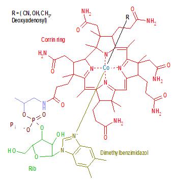 B-12 Molecular Structure