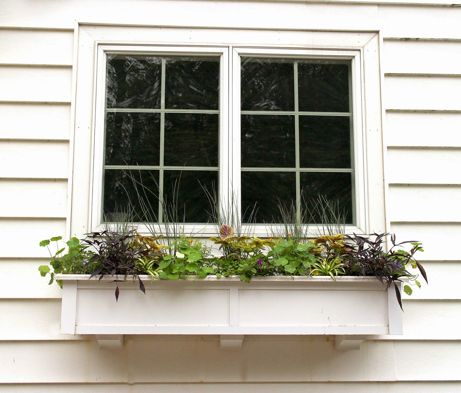 The Impatient Gardener ANOTHER SPRING ANOTHER WINDOW BOX DESIGN