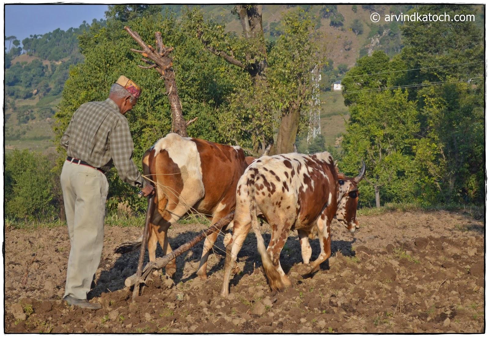 Indian Farmers, Poor Condition, Suicide,