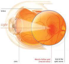 Tratament naturist pentru degenerescenta maculara