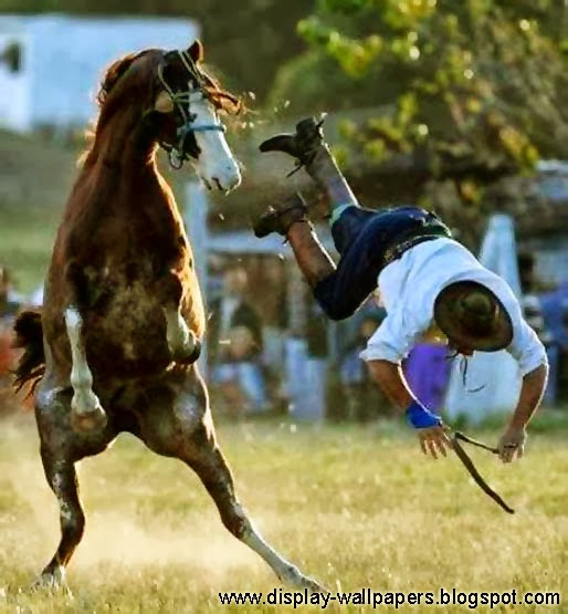 Amazing Funny: HD Wallpaper Free Stock: Amazing Funny Pictures Free Download