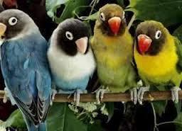 معجزة العصافير الاربعة ...سبحان الله كيف تتكلم العصافير !!!