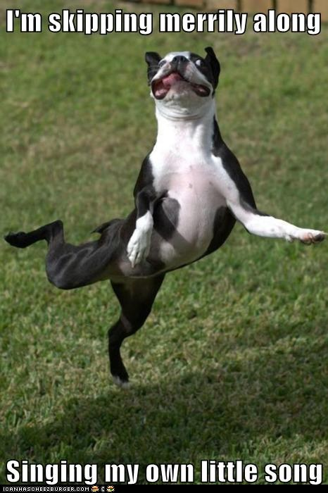 Dog dance in pictures images