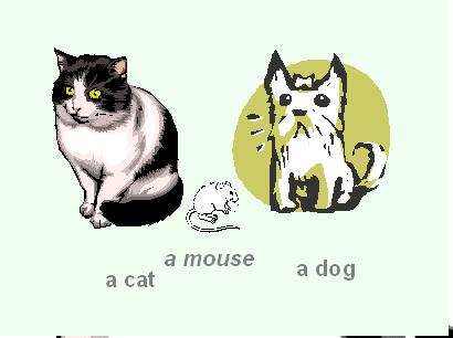Cat - Dog- Mouse