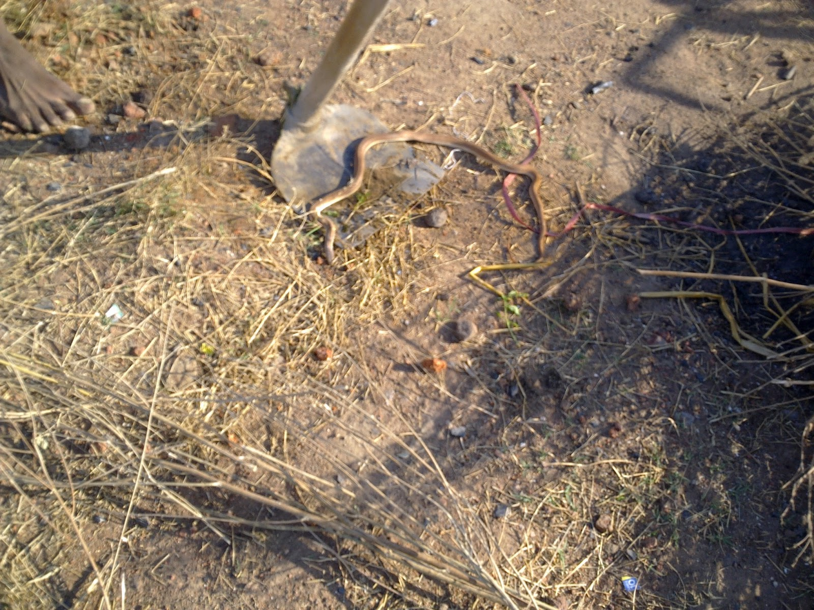 rameshwari natural farm snakes around what is the best way to
