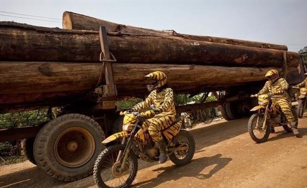 Satu Dekade Greenpeace Membela Hutan Indonesia
