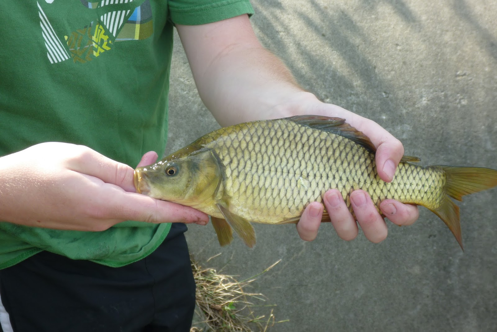 The definition of insanity a fisherman 39 s tale running for Carp meaning