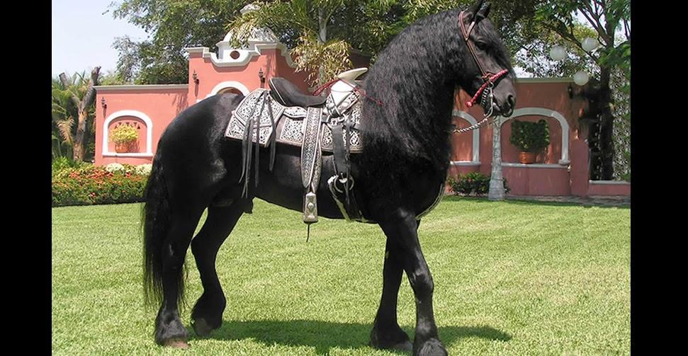 Accesorios para caballos - Silla montar caballo ...