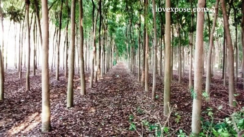 tree plantation 2 essay Check out our top free essays on importance of tree plantation to help you write your own essay.