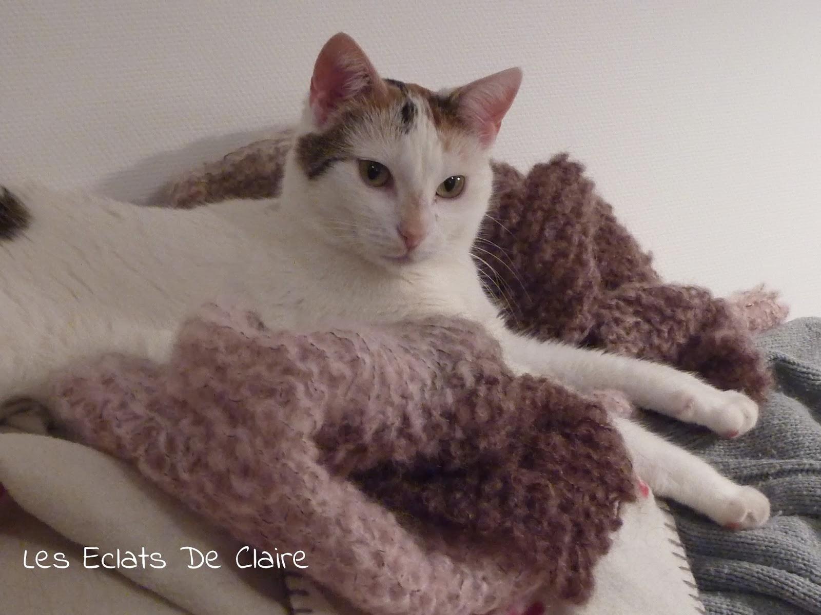Les chats - Page 38 Barbouille+3+-+les+eclats+de+claire