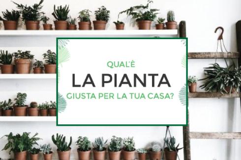 Una mini guida per scegliere la pianta per la tua casa