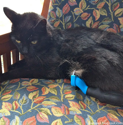 Troy the cat and his Furminator brush