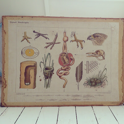 school map, chart, birds, vintage, thrifted