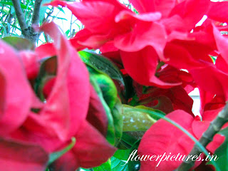 Red Bush Flowers