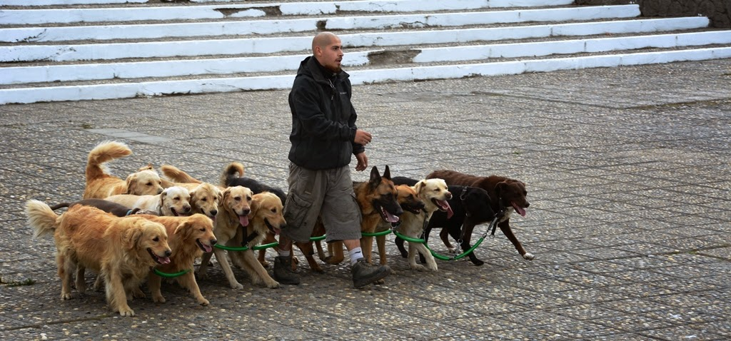 Ushuaia city dog walking